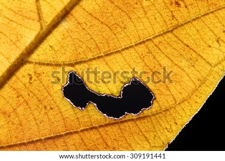 Burned Hole on leaf isolated with black background. - stock photo