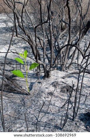 Burned-out forest and green sprout - stock photo