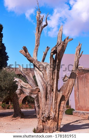 Burned tree in courtyard of the Monastery Arkadi  in Crete, Greece.