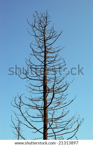 Burned tree silhouette after a forest fire. - stock photo