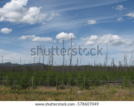 Burned trees remind of the last fire on vast landscape of Chilcotin plateau near the famous Heckman pass summit