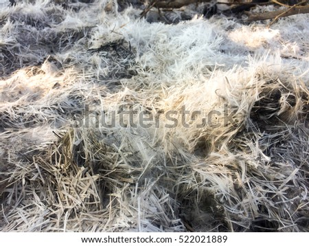 Burned wood ashes background.Cinders of wood pile and tree.Look like snow.Ashes and cinders from wood and waste burning.Air pollution.Environmental pollution concept.