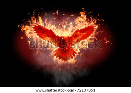 Burning bird silhouette on black background - stock photo