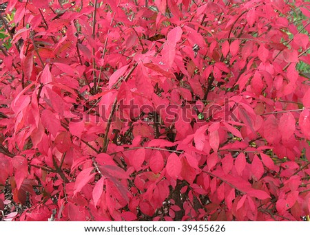 Burning bush background. - stock photo