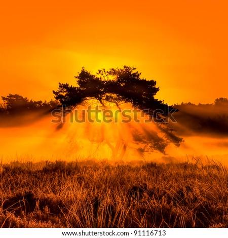 Burning Bush in Belgium - stock photo