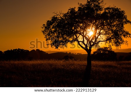 Burning Daylight, (Paso Robles, CA) - stock photo