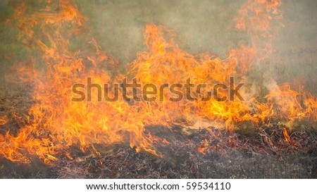 Burning dry grass during the summer wildfires