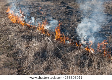 Burning dry grass in the middle of summer - stock photo