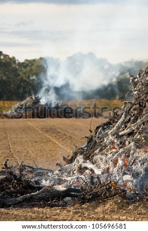Burning old vines after a vine pull - stock photo