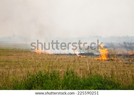 Burning paddy fields after harvest - stock photo