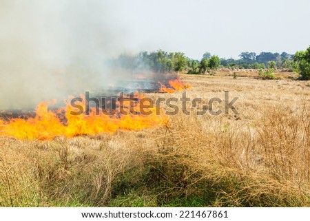 burning straw in the fields - stock photo