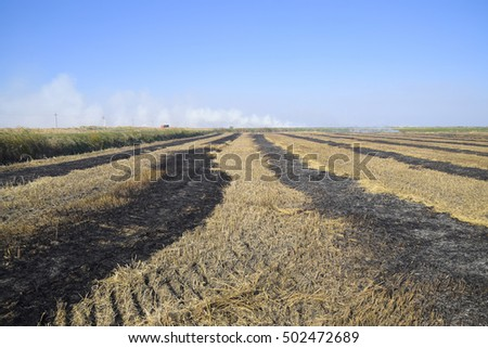 burning track in paddy field. Landscape burning field