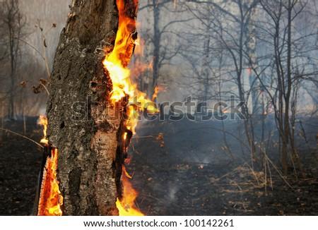 Burning tree - stock photo