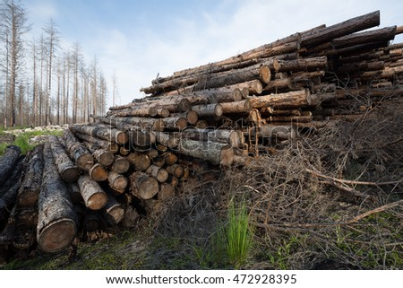 Burnt coniferous trees piled after a forest fire in sweden