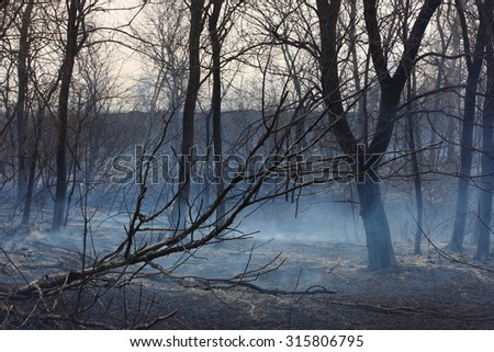 Burnt forest in the dense smoke