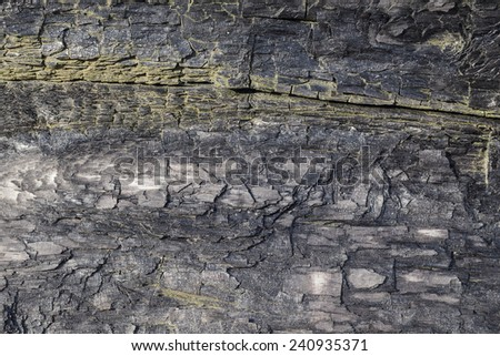 Burnt Wood Texture Background