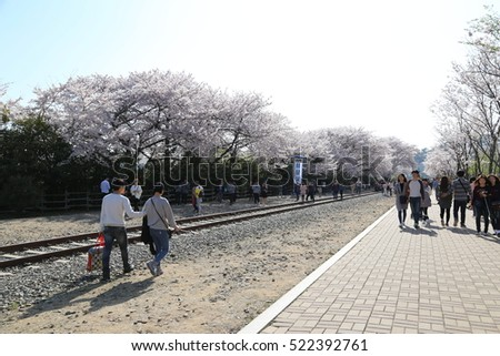 BUSAN - 5 APR: Gyeonghwa Station (Cherry Blossom Road) in Busan, Korea on 5 April 2016