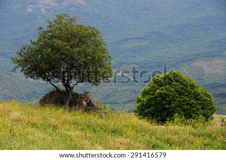 Bush and tree in the countryside in Georgia - stock photo
