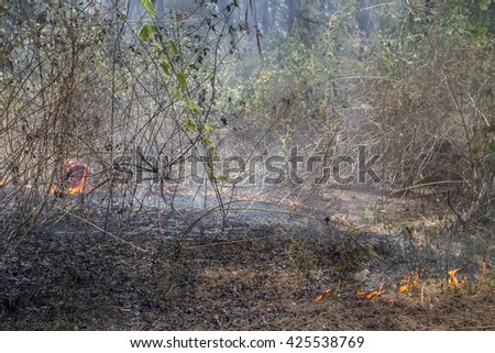 Bush fire caused by el nino and pit fire - stock photo