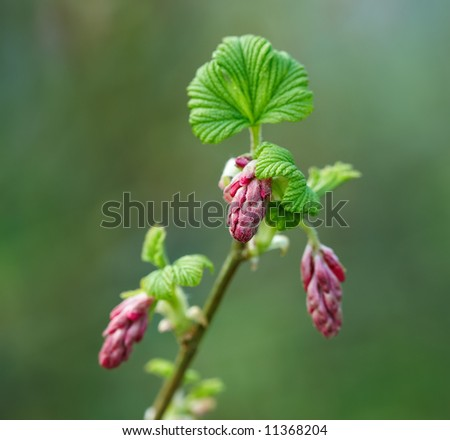 Bush flowers in early spring - stock photo