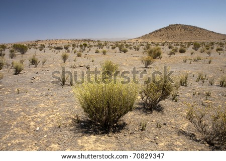 Bush in semi-desert - large wasteland - stock photo