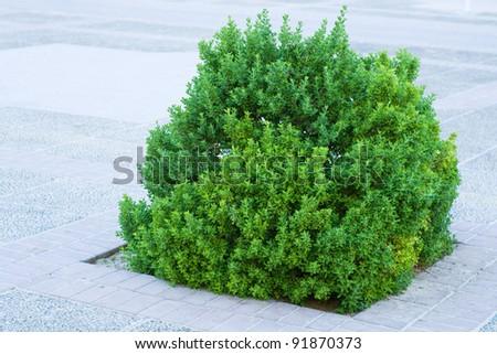 Bush in the patio - stock photo