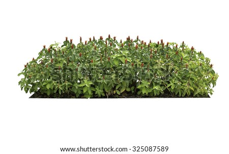 bush isolated on white background,add Clipping path  - stock photo