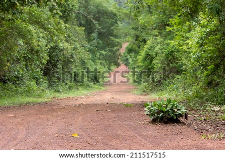 bush on forest road in Thailand - stock photo