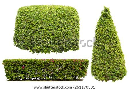bush on white background , isolated - stock photo