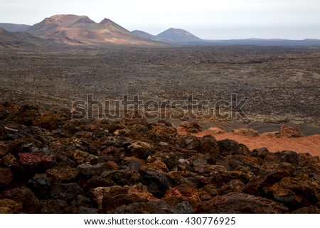 bush timanfaya  in los volcanes volcanic rock stone sky  hill and summer  lanzarote spain plant flower  - stock photo