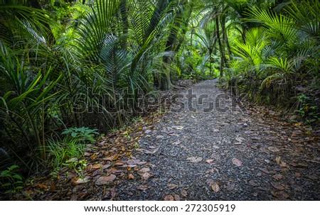 Bush track through native New Zealand flora. - stock photo