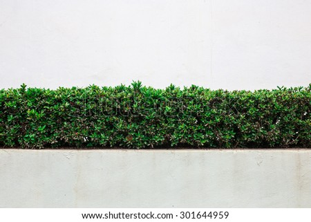 bush wall on white wall - stock photo