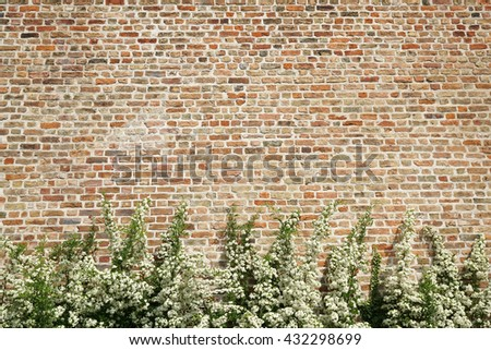 bush with white flowers in front of old brick wall as background with copy space - stock photo