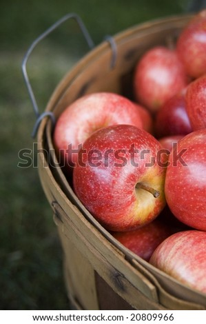 Bushel of apples - stock photo