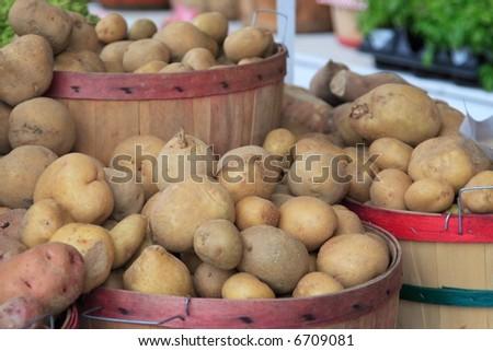 Bushels of Long Island potatoes at a road side stand - stock photo