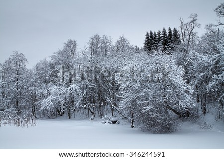 Bushes and trees covered with snow