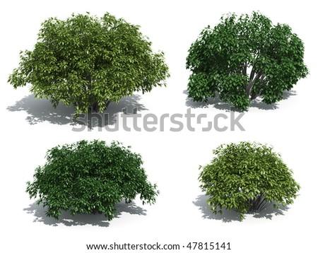 Bushes isolated on white background - stock photo
