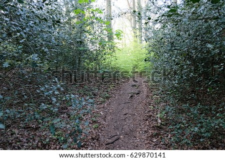 Bushes pathway