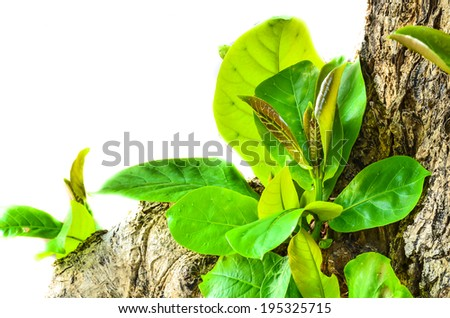 bushes planted in the spring - stock photo