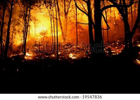 Bushfire/Wildfire closeup at night - stock photo
