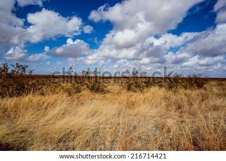 bushveld - stock photo
