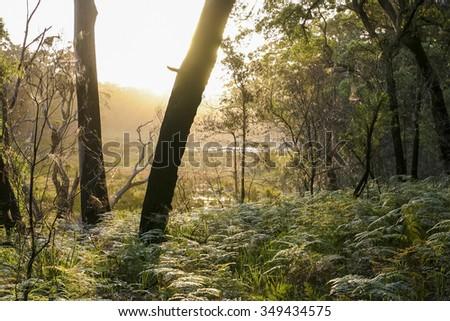 Bushwalking in Booderee National Park. Jervis Bay. NSW. Australia  - stock photo