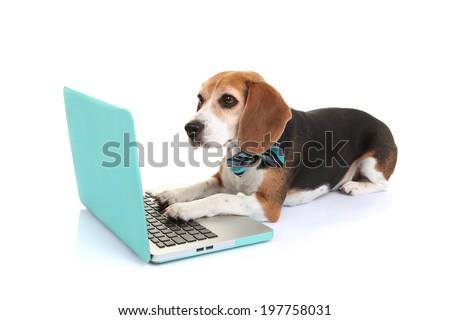 business concept smart pet dog using laptop computer - stock photo
