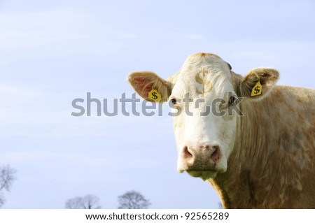Business concept to illustrate the cash cow principle of generating high profit margins. - stock photo