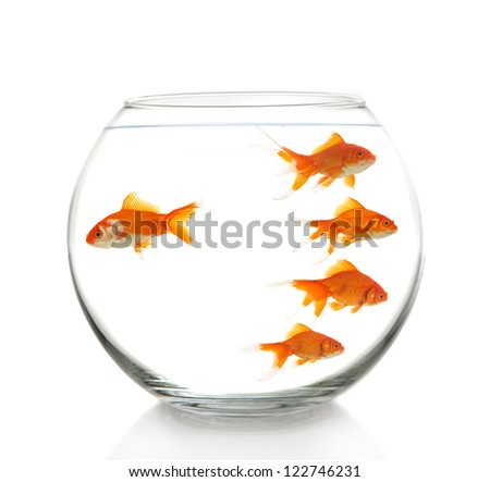 business concept with some goldfishes in bowl, on white - stock photo