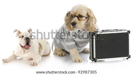 business deal - excited bulldog puppy looking at cocker spaniel business man with briefcase