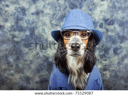 Business/detective/mob/dog in a suit with hat - stock photo