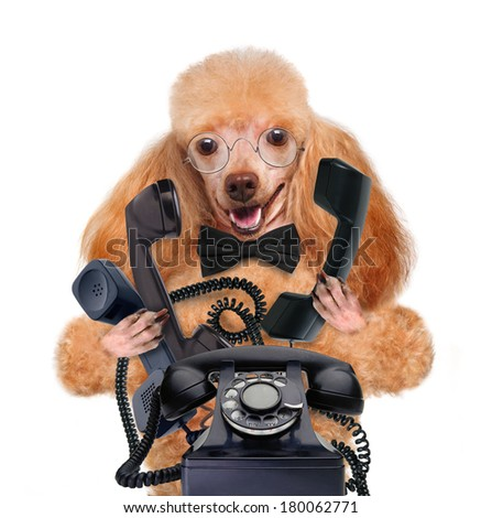 business dog on the phone  - stock photo