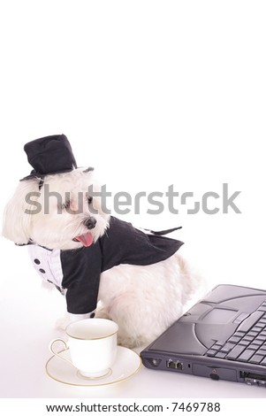 business doggy with computer - stock photo