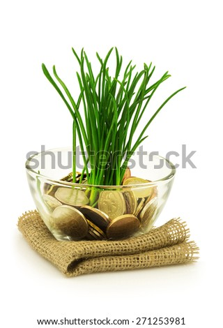 Business, ecology concept with money and grass isolated on white background - stock photo